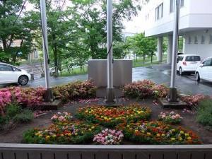 20150701花壇