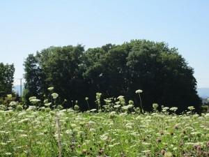 白い花と森_400