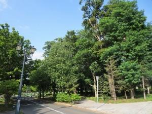 森と街路樹_400