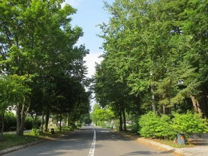 街路樹_400