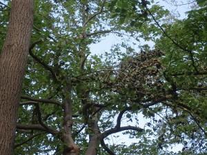 1010樹上の木